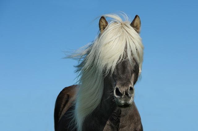 Geschenke für Pferdefans