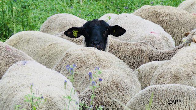 Originelle Geschenke Für Landwirte Unser Top 15 Ideen Zum