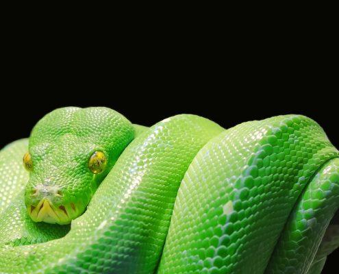 Geschenkideen für Reptilienfans